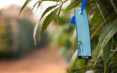 The Ins and Outs of Cannabis Compliance for Cultivation